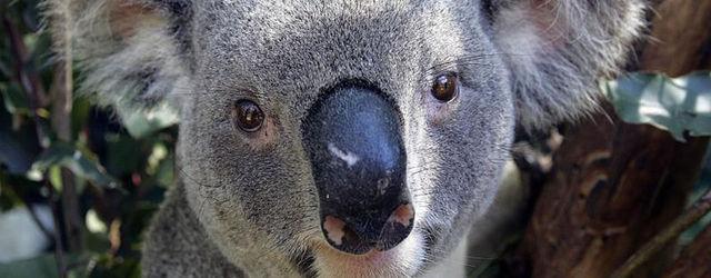 Saints Row IV vuelve a ser rechazado en Australia